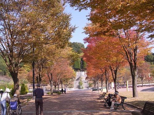 2009.10.29岐阜花フェスタ記念公園 043