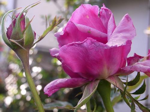 2009.11.27紫雲